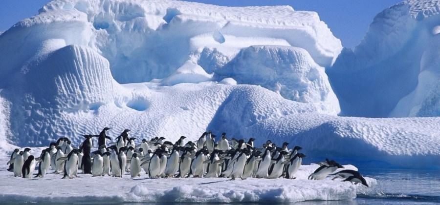Curiosidades sobre a Antartida